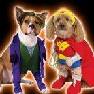 Pets costumes